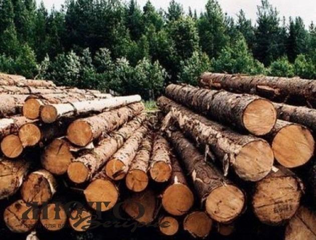 На Волині чоловік підробляв документи, аби продати деревину