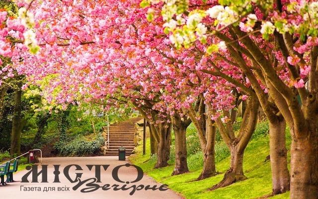 У Володимирі хочуть створити алею квітучих дерев