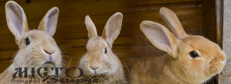 У Зимнівській громаді покарали злодія, який поцупив кролів