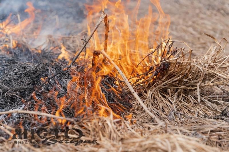 В Україні заборонили випалювати траву