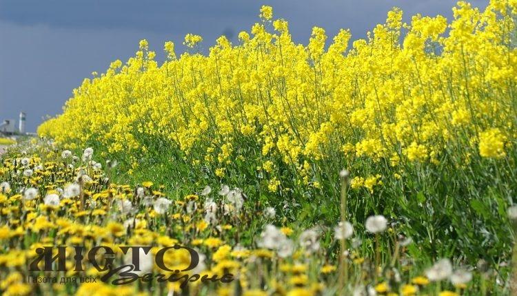 Державний аграрний реєстр України набув чинності