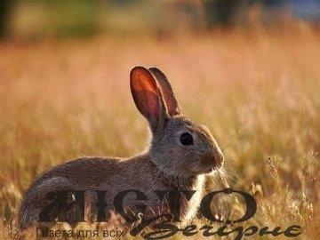 На Волині затримали нічних браконьєрів, які полювали на зайців