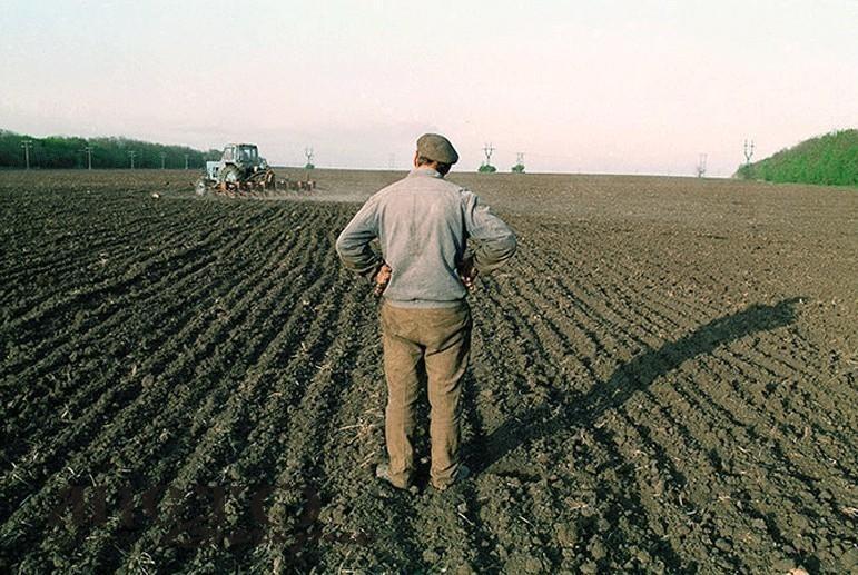 Скільки коштуватиме гектар землі на Волині після відкриття ринку
