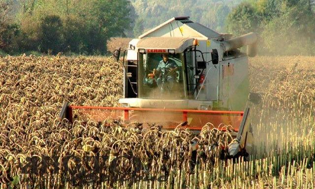 Волинські аграрії пояснили, чому дорожчає олія