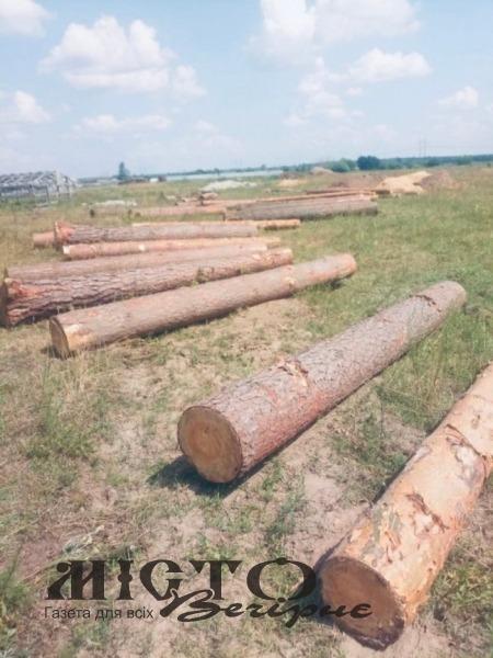 У селі на Волині на приватній пилорамі виявили незаконно зрізаний ліс