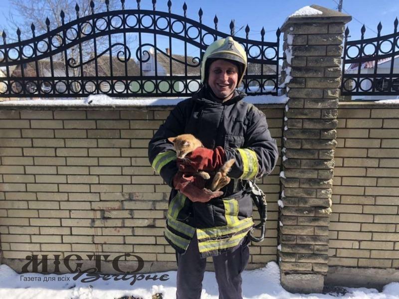 У Володимирі врятували кішку, яка три доби просиділа на дереві