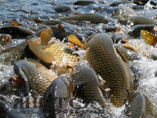 На водоймах Волині знову можна ловити рибу