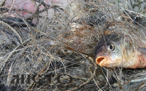 У Володимир-Волинському районі затримали й оштрафували рибних браконьєрів