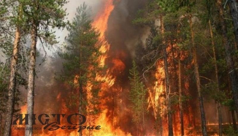 За вчинення лісової пожежі в Оваднівській громаді чоловік заплатить штраф