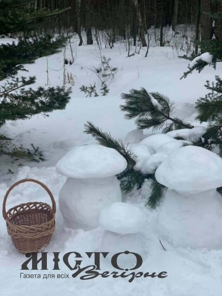 У волинському лісі знайшли «білі» гриби