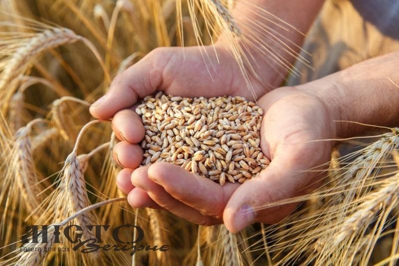 Мешканець Володимра відсудив гроші за пшеницю у боржника