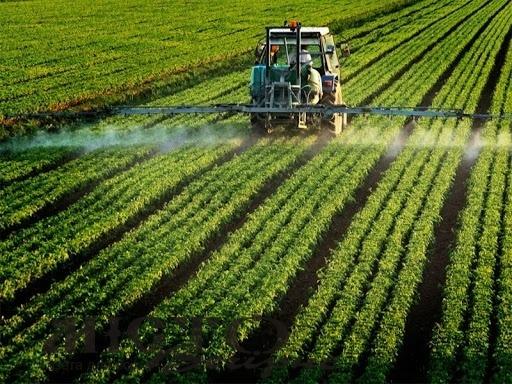 Пасічників Володимир-Волинського району попереджають про пестицидну обробку полів