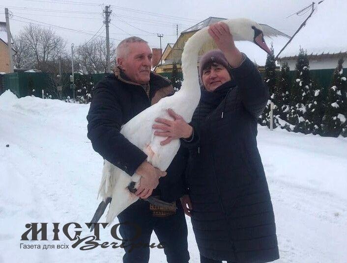 На Турії врятували лебедя, який примерз до криги