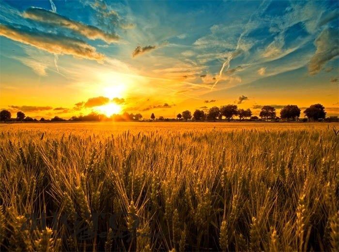 У серпні синоптики прогнозують в Україні спеку до 40 градусів