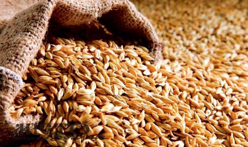 Україна експортувала понад 17 мільйонів тонн зерна