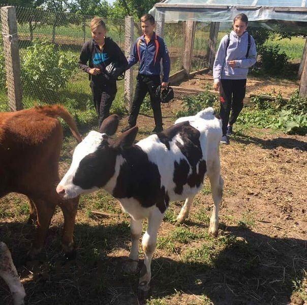 В Устилузькій громаді учням провели екскурсію на молочну ферму