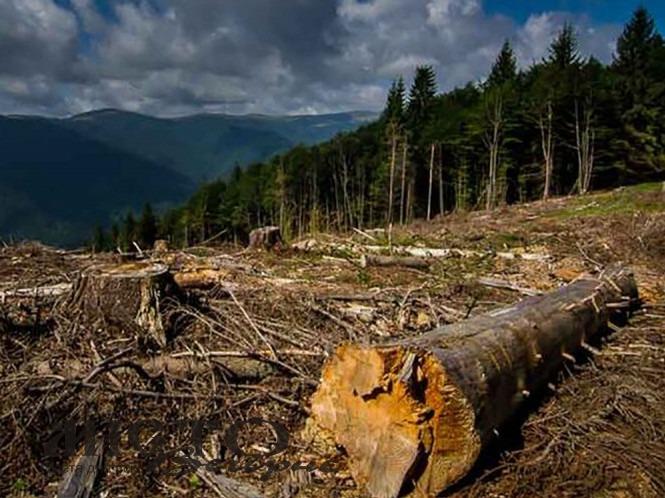 На Волині понад сотню осіб оштрафували за екологічні правопорушення