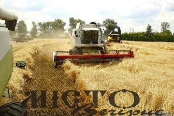 Прогнозують зростання врожаю зернових в Україні