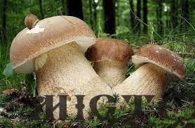 П'ять мешканців Іваничів отруїлися грибами