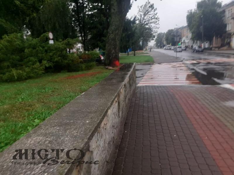 У Нововолинську дорожню розмітку нанесли на… дерево