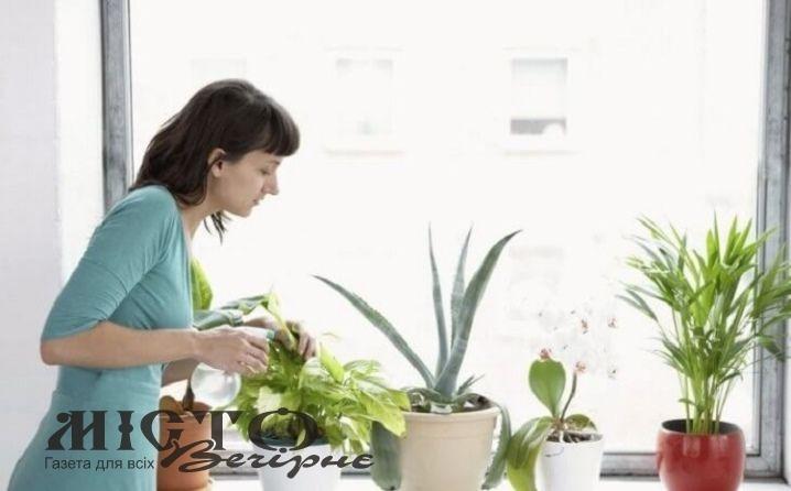 Повернення кімнатних рослин у приміщення