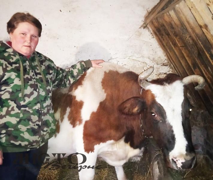 Ветлікар села Лудин Оксана Лопатюк проводить обстеження сільськогосподарських тварин.