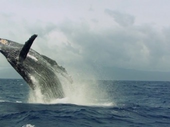 National Geographic визнав існування п'ятого океану