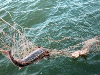 Рибалку, що використовував заборонене приладдя на Лузі, притягнули до адмінвідповідальності