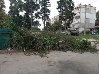 На мешканку Володимира, яка організувала самовільну вирубку дерев, склали адмінпротокол