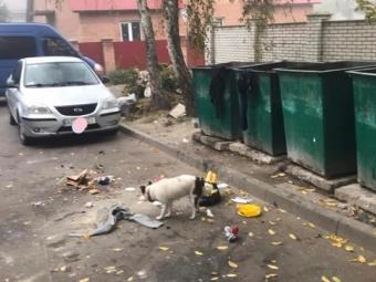 У Володимирі комунальники просять водіїв не паркувати свої авто біля майданчиків для сміття