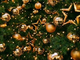 Скільки коштуватимуть новорічні ялинки на Волині