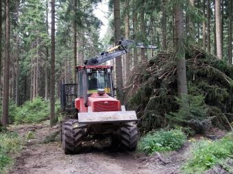 Боротьба з чорними лісорубами в Україні дала потужний ефект