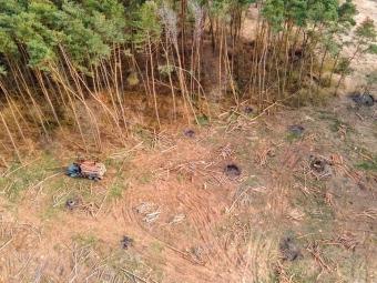Біля Володимира-Волинського здійнюють рубку лісу