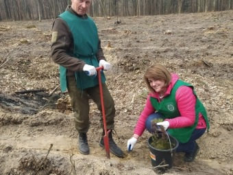 На Володимирщині висадили молоді сосни та дуби