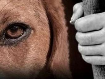 Мешканцю Володимир-Волинського району, який на очах у дітей перерізав горло собаці, обрали запобіжний захід