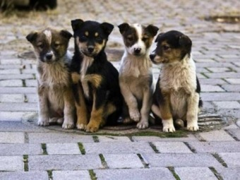У Володимирі обговорили проблему безпритульних тварин