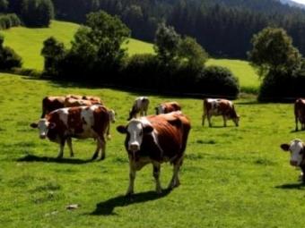 На Волині хочуть виділити півтора мільйона на покращення природин пасовищ