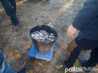 У Любомльському районі рибалки-любителі випустили у озера 1300 кілограмів карася та коропа