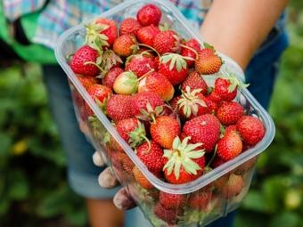 Через пандемію українці багато не зароблять на польській полуниці