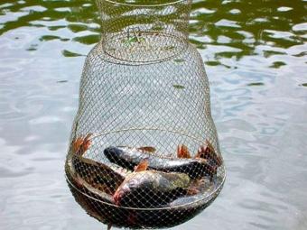 В Україні змінять правила рибальства