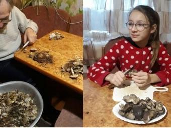 У турійських лісах досі збирають гриби