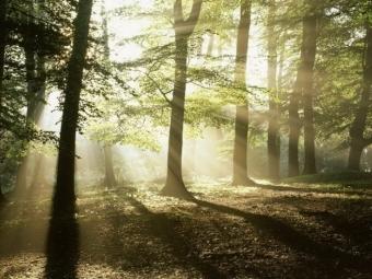 Волинський ліс наповнив бюджети на понад 82 мільйони гривень