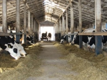 Підприємство Володимир-Волинського району перше у рейтингу молочних ферм в Україні