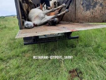 На Рівненщині блискавка вбила трьох коней