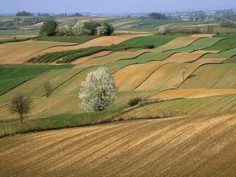 В Оваднівській громаді у фермерського господарства заберуть 50 гектарів землі