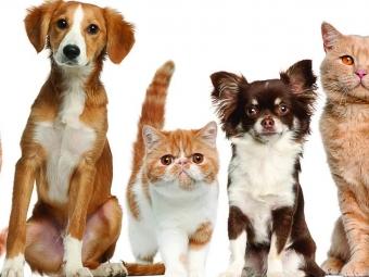 У Володимирі хочуть затвердити правила утримання домашніх тварин
