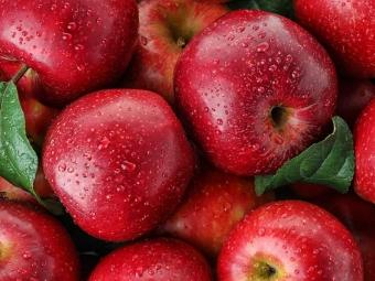 В Україні аномально великий врожай яблук