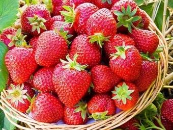 В Україні дешевшає полуниця