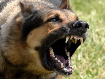 У мешканки Володимира конфіскували собаку, яка покусала перехожого
