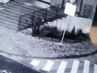У Володимирі знову вкрали тую, зловмисника зафіксували відеокамери